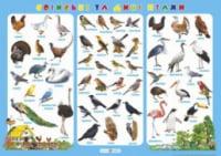 Плакат «Свійські та дикі птахи». Корнєєва О.