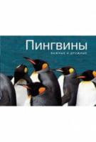 Пінгвіни. Важливі і дружні