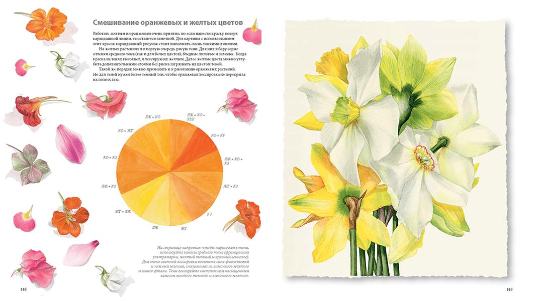 Ботанические портреты. Практическое руководство по рисованию акварелью - фото 3