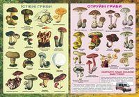 Плакат «Їстівні та отруйні гриби».