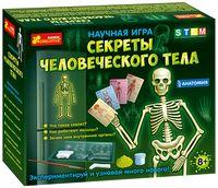 Анатомія.Скелет людини