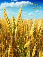 Зошит офісний Серія Мій дім  Пшеничне поле