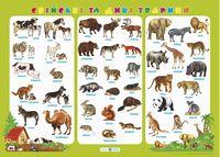 Свійські та дикі тварини. Плакат