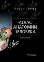 Атлас анатомии человека. 6-е издание. Неттер