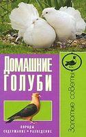 Домашні голуби