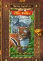 Коты-воители. Золотая коллекция. Длинные тени. Восход солнца