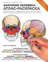 Анатомия человека атлас-раскраска